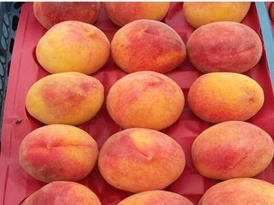شانه میوه هلو