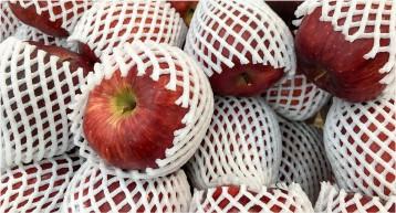 خرید انواع فوم ضربه گیر میوه